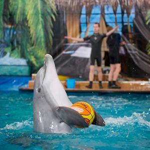 Дельфинарии, океанариумы Нерехты
