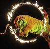 Цирки в Нерехте