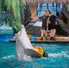 Дельфинарии, океанариумы в Нерехте